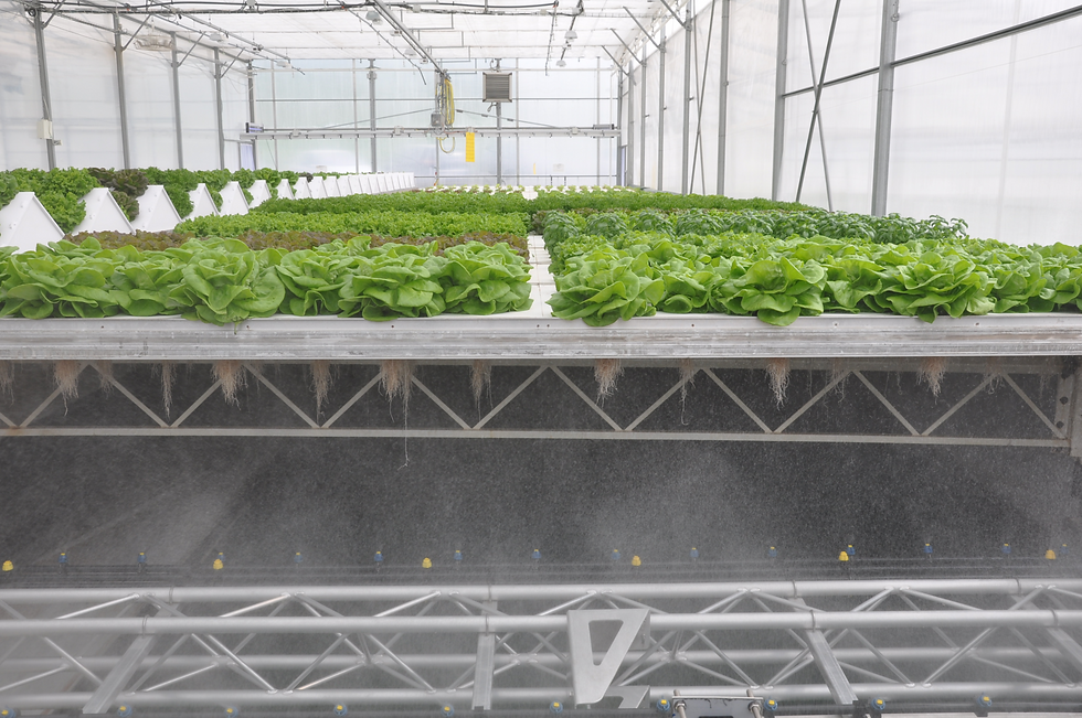 CleanGreens greenhouse aeroponics lettuces herbs efficiency high yield
