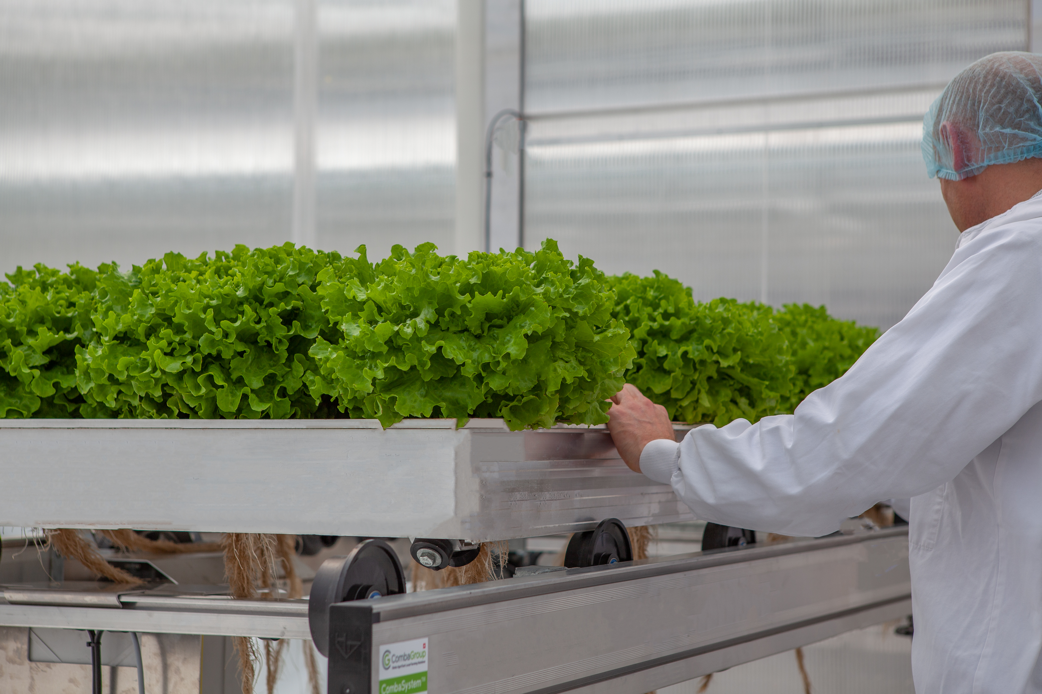 CleanGreens cultivation table batavia easy handling sustainable agriculture premium quality