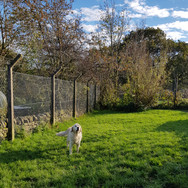 Mountview Kennels
