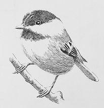 Drawing Bird.jpg
