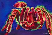 taracnchula art.webp