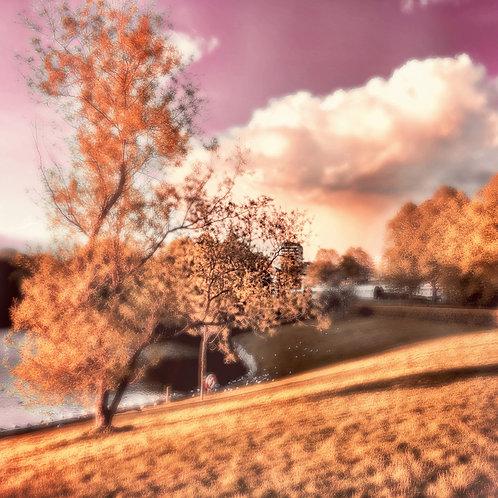 """PHOTOART """"SOFTREALITY-The Park"""""""