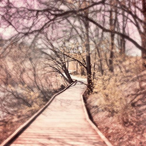 "PHOTOART ""SOFT REALITY - The Track"""
