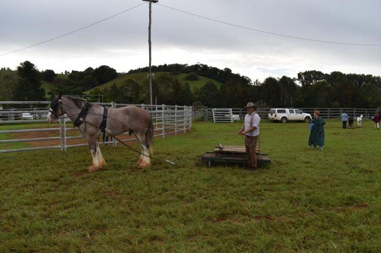 Horse Event.jpg