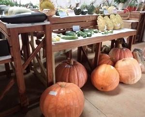 Fruit Vegtable Exhibition.jpg