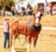 Brad horse.jpg