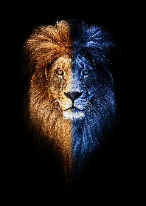 Portrait of a Beautiful lion, lion in da