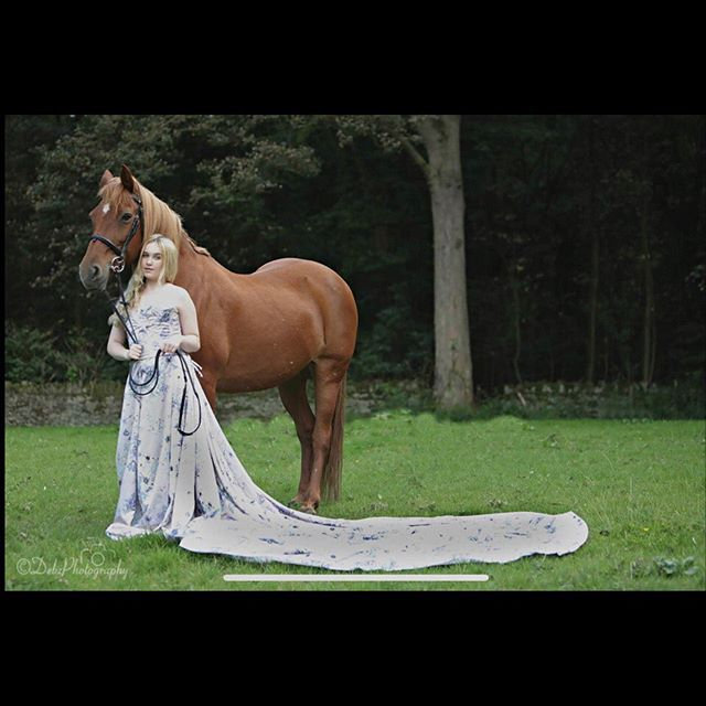Equine Modeling