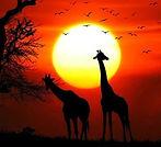 giraffe_15_edited.jpg