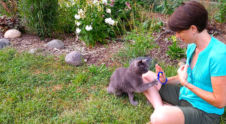 cat clicker training, train your cat with Heather Alvey's professional help. Heather is a certified feline behaivior specialist.