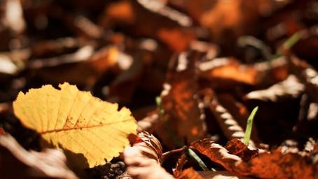 Neue Modelle der Herbst-Winterkollektion für alle kybun Liebhaber