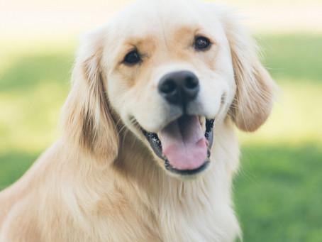 Auch Hunde lieben kybun Schuhe