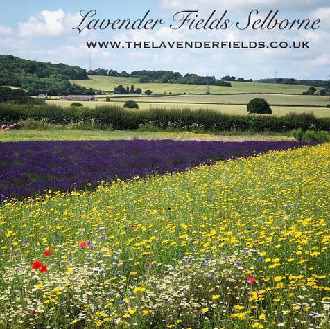Lavender & Wild Flowers 2019.jpg