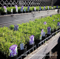 Hidcote Plants.jpg
