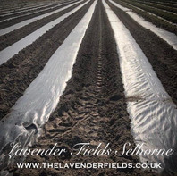 Rows ready for planting April 2020.jpg