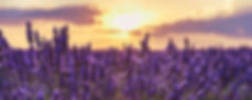 Lavender Field Sunset.jpeg