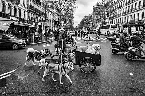 a black and white photo of a dog sitter in the streets of paris, he is on a cargo bike with his dogs around him, he crosses a large avenue, photographed by laurent delhourme