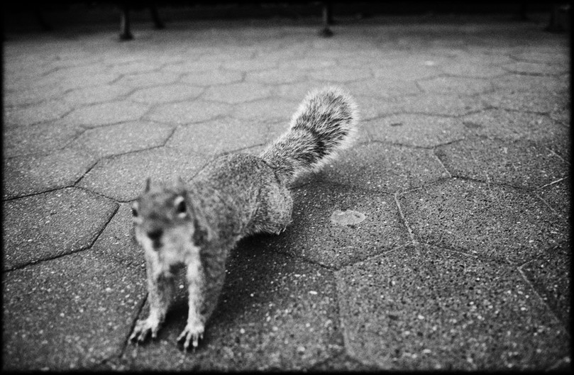Laurent Delhourme - New-York street photographer -