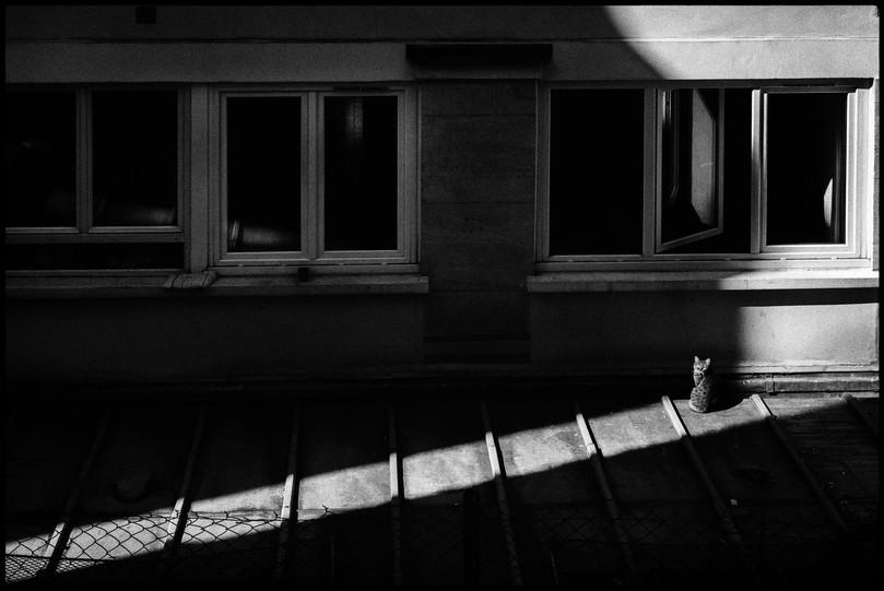 Laurent Delhourme - French Street Photographer - Paris - le chat du voisin