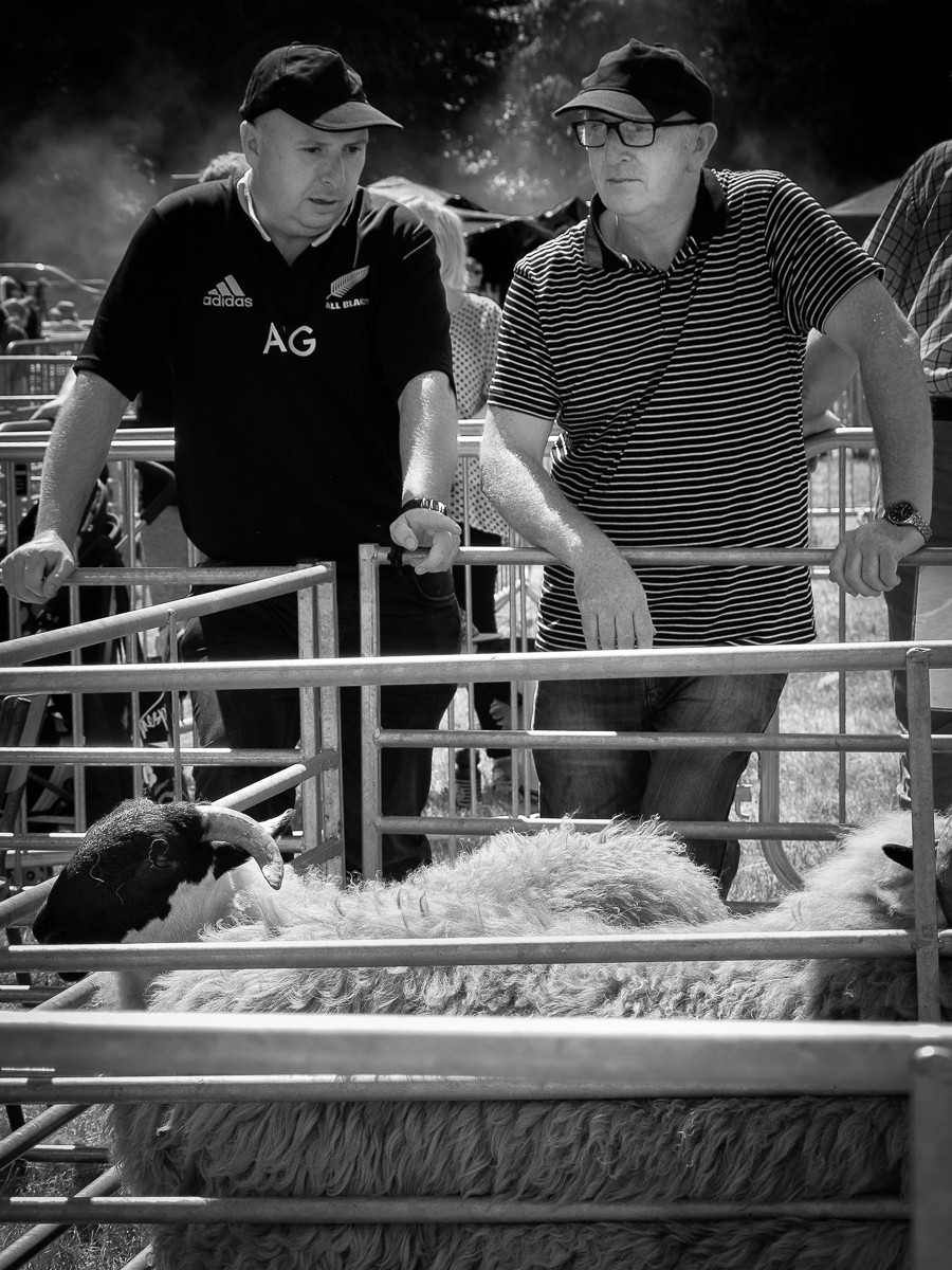 MONO - Sheep at Castlewelland Show by Ken Barrett (8 marks)