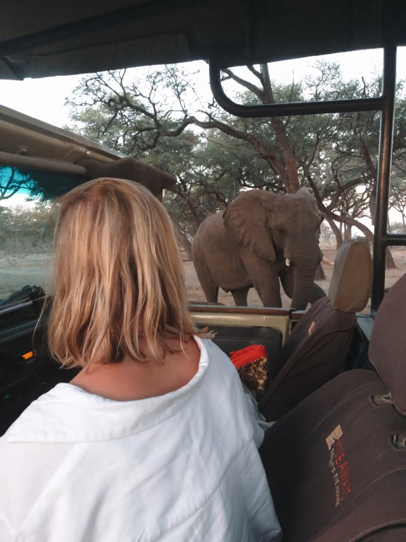 Elephant's in Hwange