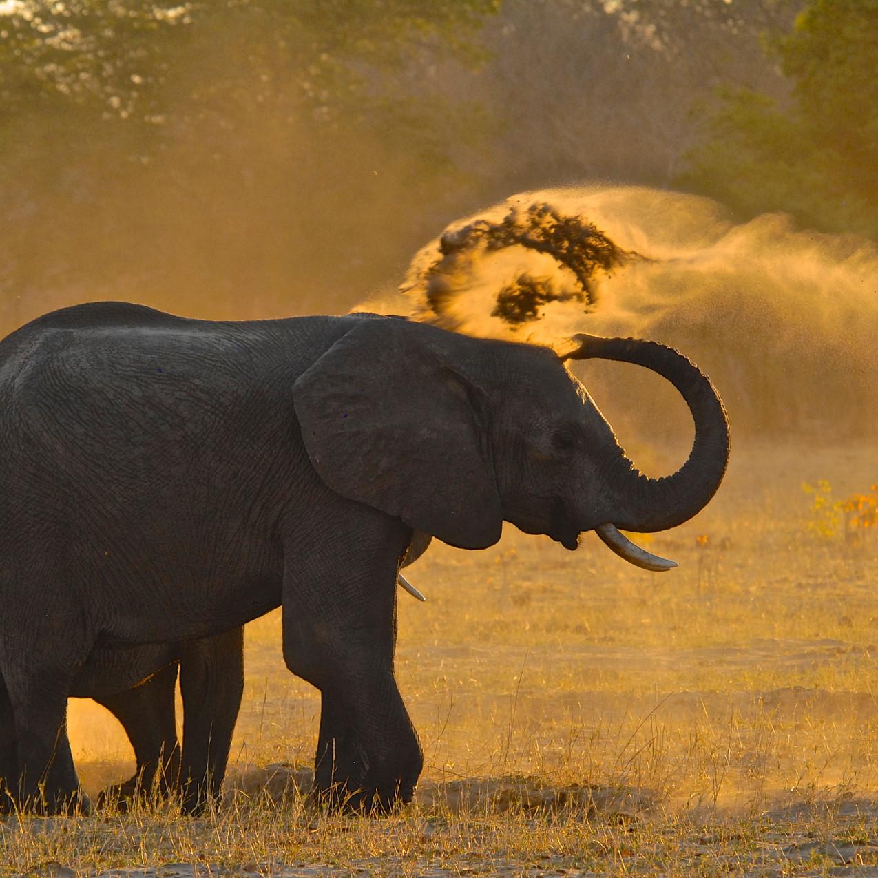 Elephants at Bomani Tented Lodge