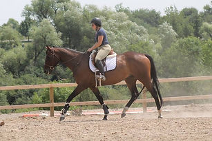OTTB Mare on Training