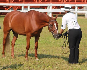 North American Sport Pony Qualifer