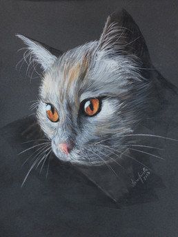 le chat Orso