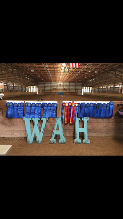 Wild About Horses Shows