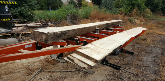"""2 sided Cottonwood """"cant"""" and slabs"""