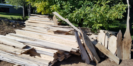 Cottonwood slabs ready to be dried