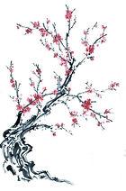 chinese-tree-pink-blossom.jpg