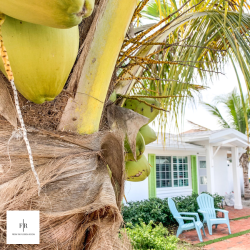 Coconut trees in the front and back of property