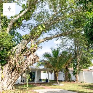 Large banyon tree provides shade