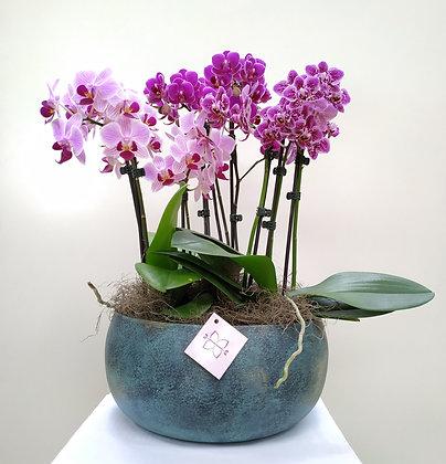 Mix de Orquídeas & Vaso de Metal