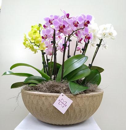 Mix de Orquídeas & Vaso de Polietileno