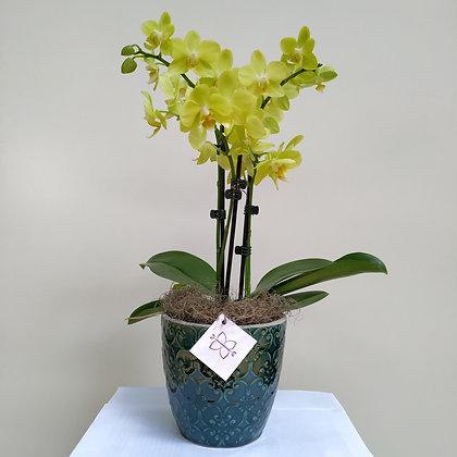 Orquídea Petit