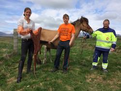 Dyrlæge, dyrlæge, islænderdyrlægen, islænder, islandsk hest
