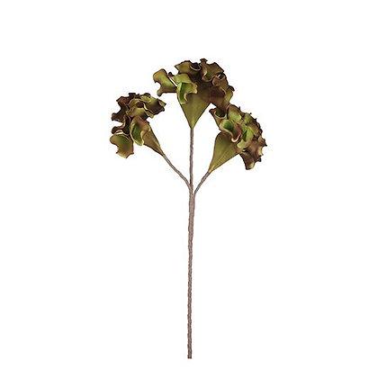 Flor Celosia