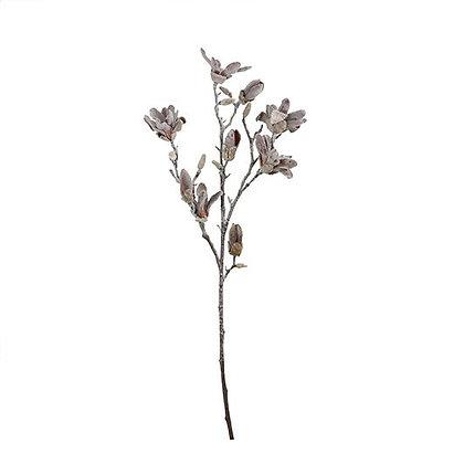 Flor Magnolia L