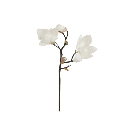 Flor Magnolia Nieve