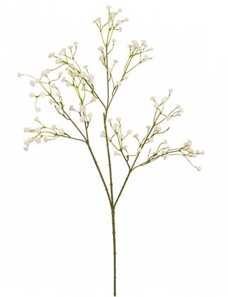 Flor Gypsophila Crema
