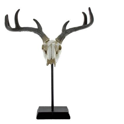 Escultura Cráneo Natural