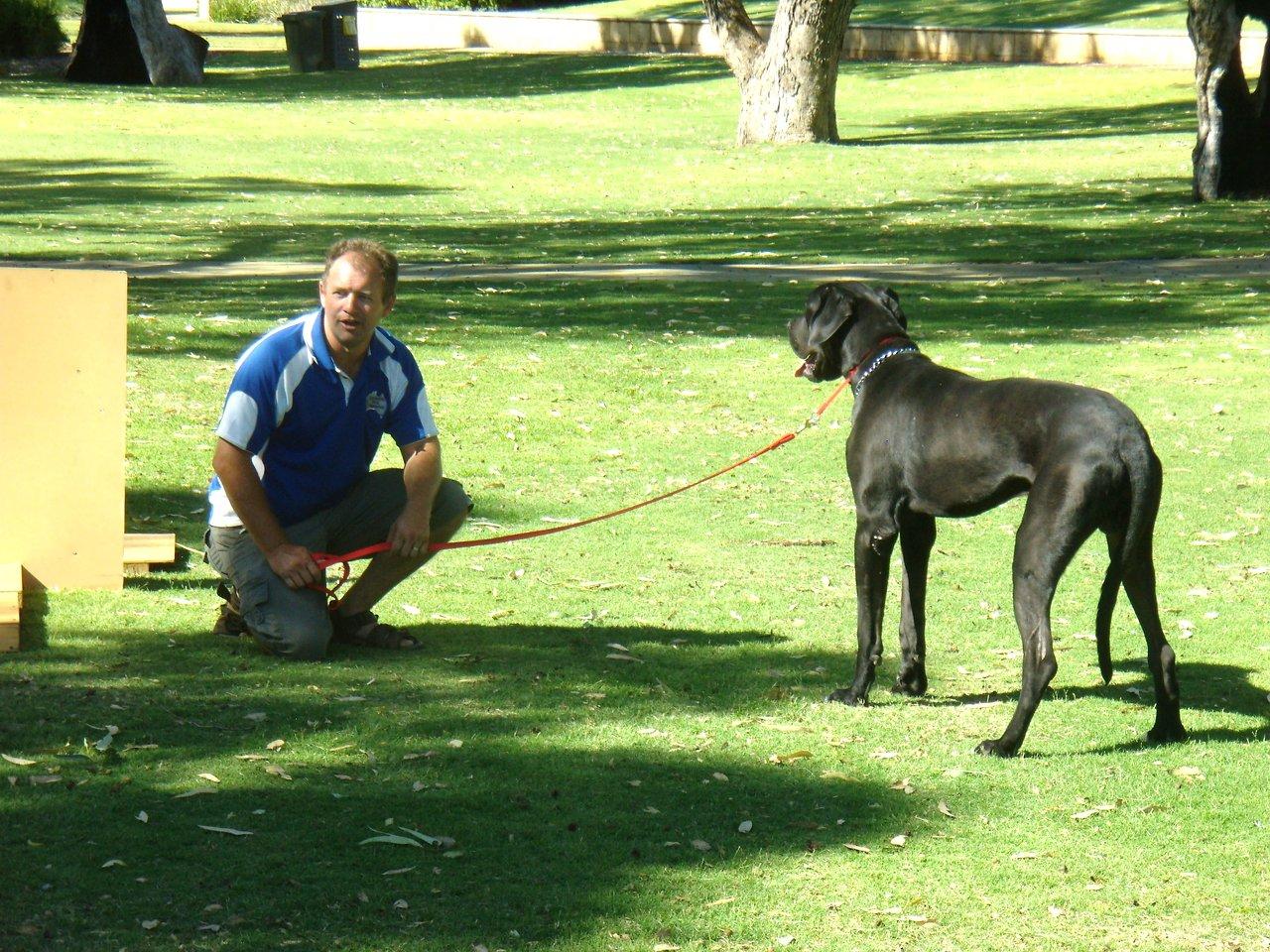 DOGS GREAT DANE 016.JPG