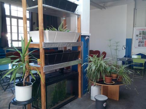 Installation d'aquaponie.jpg