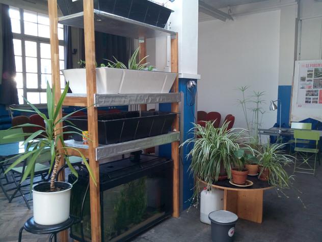 Installation aquaponie.jpg