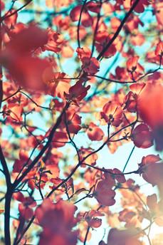 Lullier - fleurs (80 sur 236).jpg