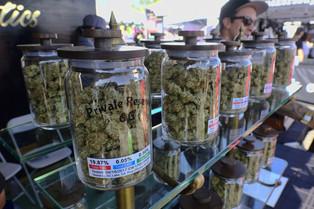 Dita e parë e shitjes ligjore të marihuanës në Kaliforni me radhe të gjata.