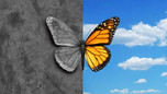 Bipolar Disorder alias Manic Depression